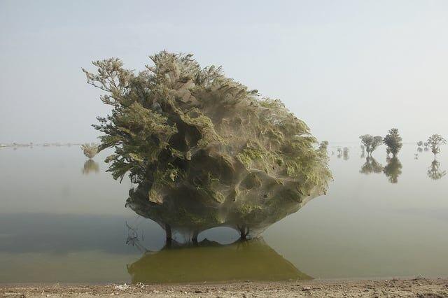 Um pouco de design natural… Árvores Aranha