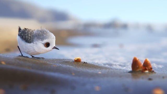 Curta da Pixar/Disney mostra um Maçarico-das-rochas pensando fora da caixa