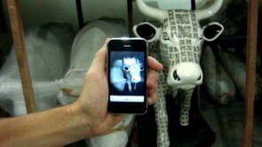Cow Parade SP traz a primeira vaca conectada as redes sociais